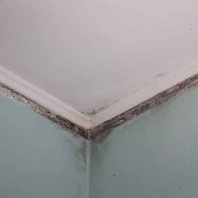 Irritated from the mold in the apartment and want to remove it?